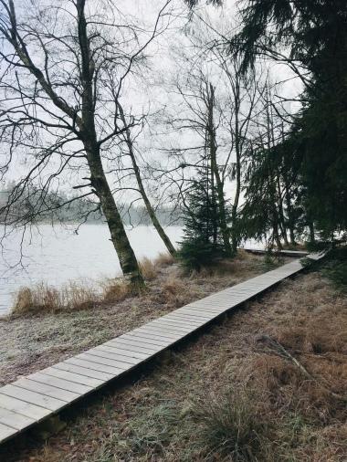 Holzpfad am Teich entlang