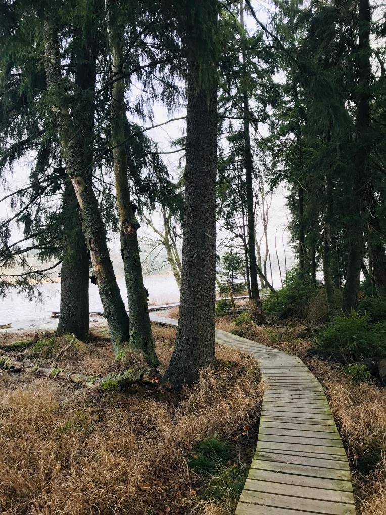 Holzpfad direkt durch die Natur